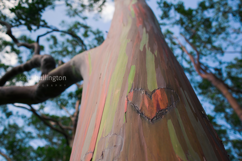 Kelly Bullington Photography- Hawaii-14.jpg