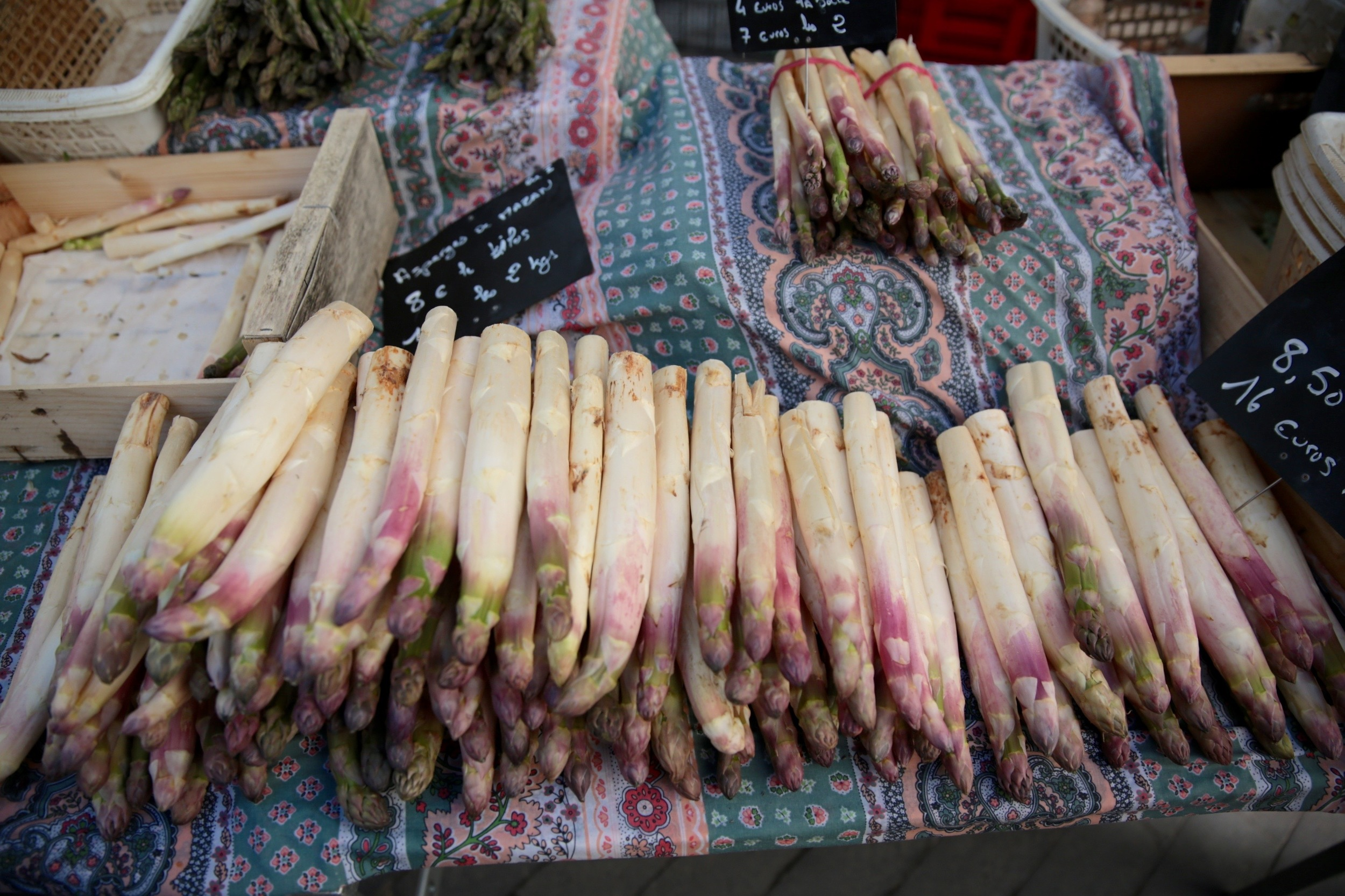 asparagus-travel-photography-kelly-bullington-fairhope