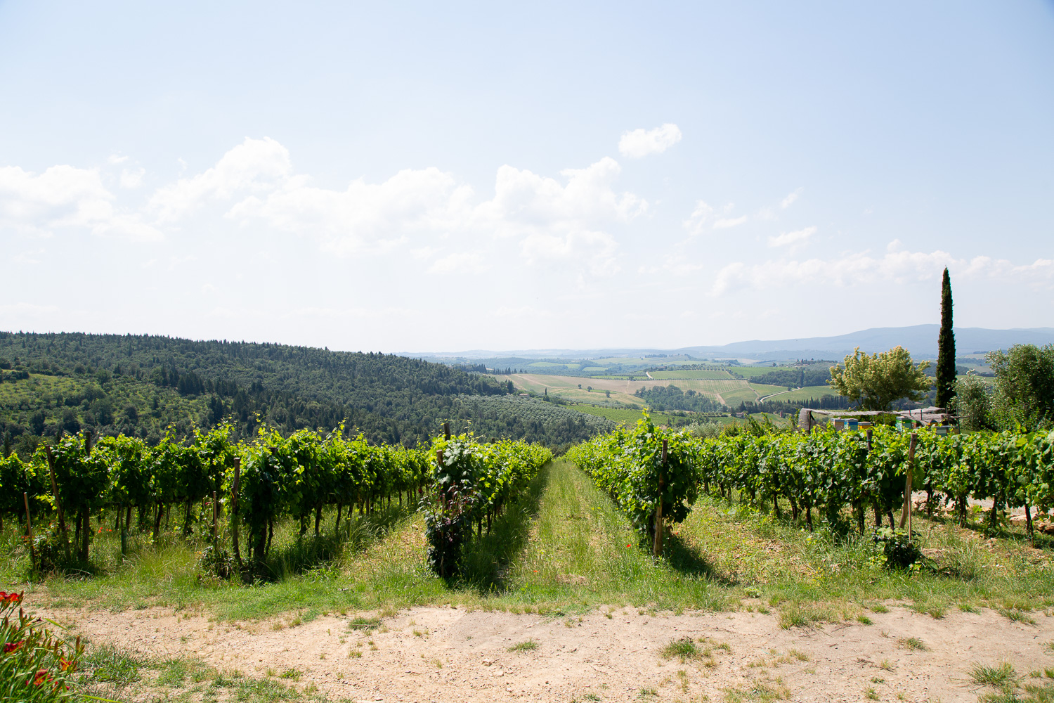 tuscan wine tour