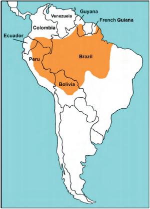 black_caiman_map.png