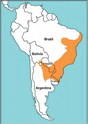 latirostris_map.png