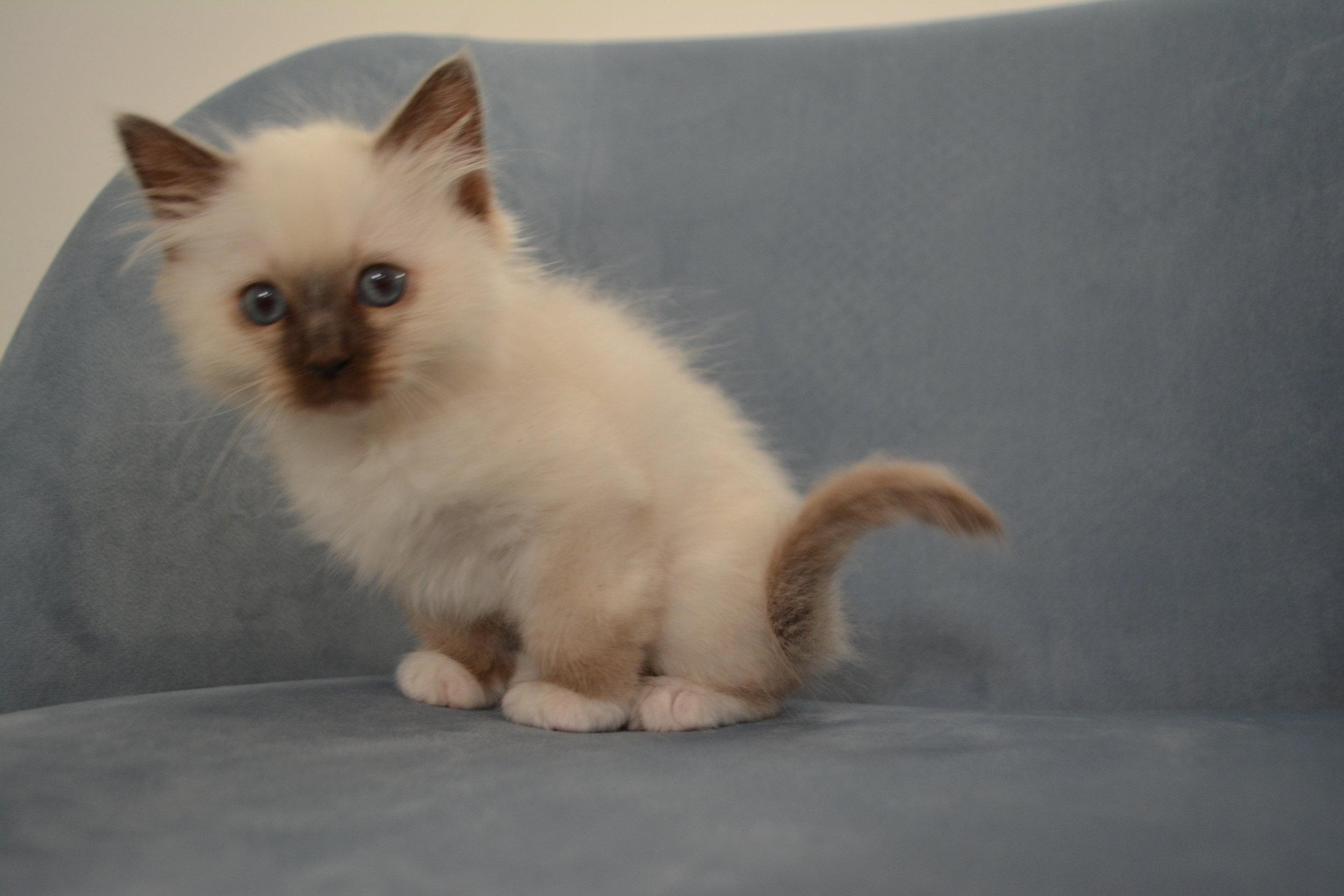 Firgaro 9 uger gammel