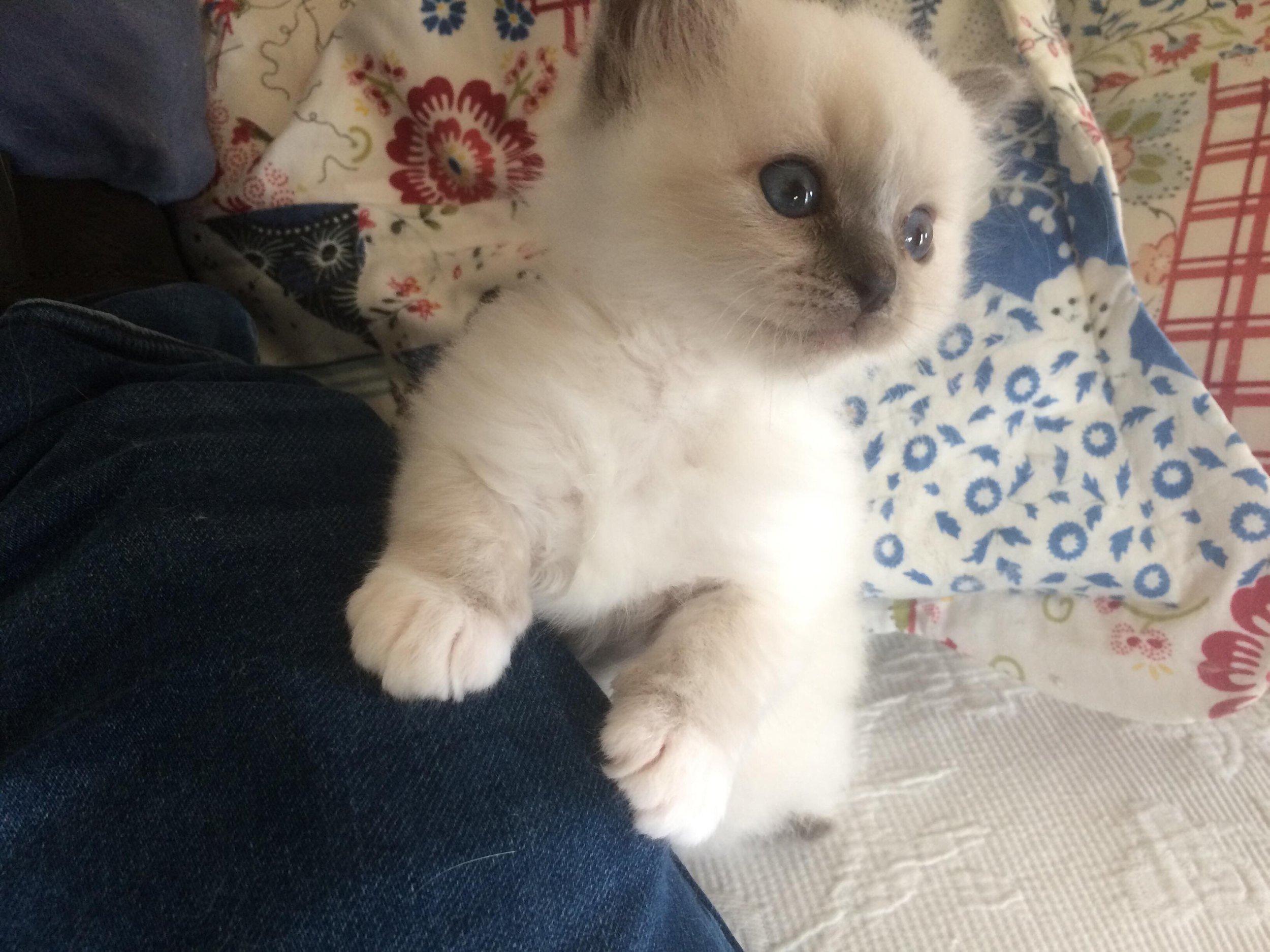 Gavin 5 uger gammel