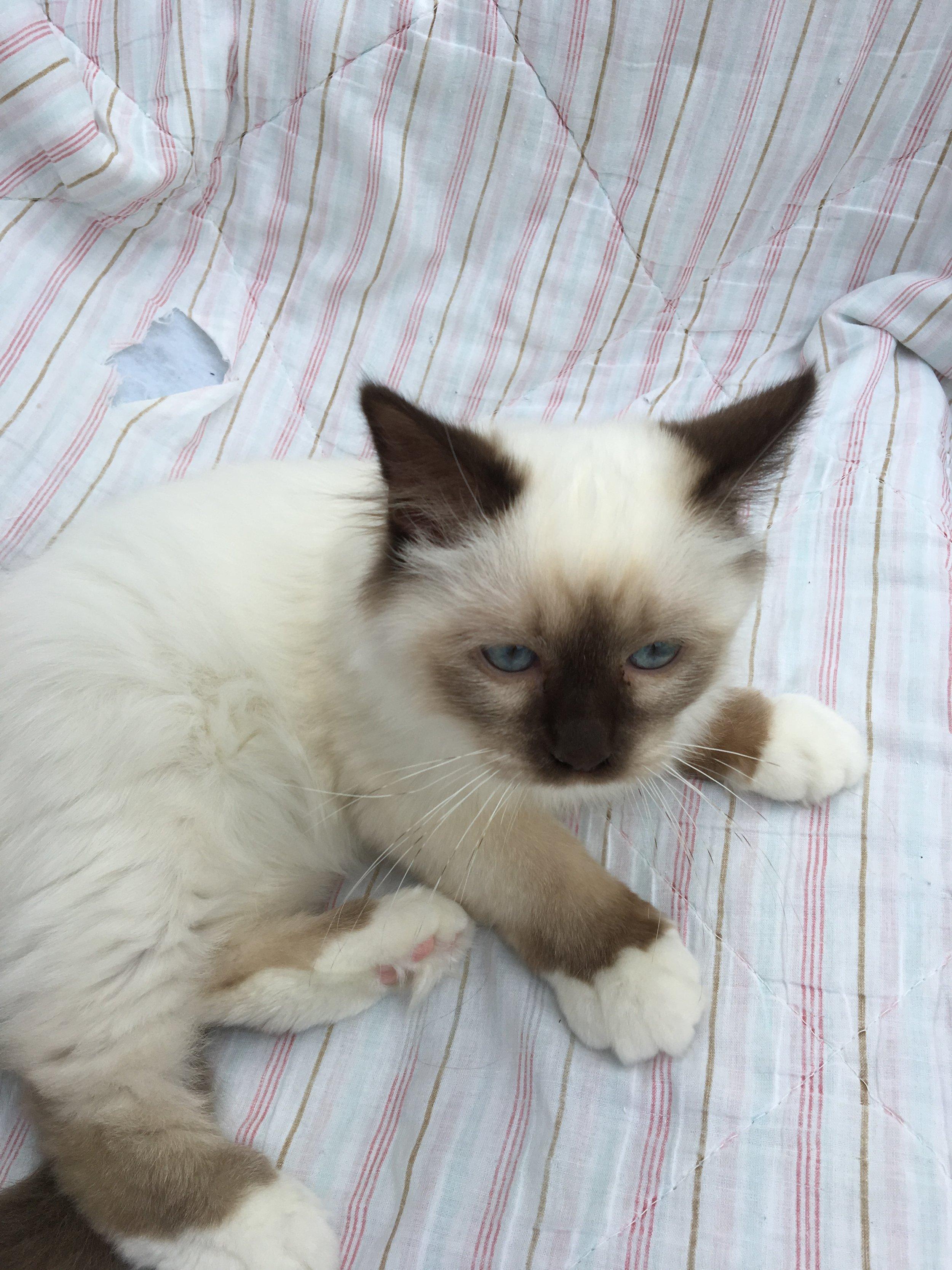 Figaro 21 uger gammel