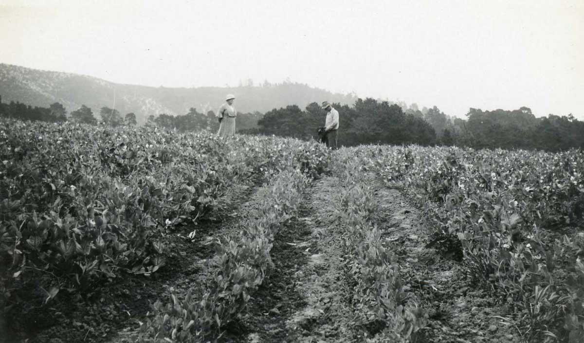 Pea-Crop,-Lou-and-Stanley-CRO-25.jpg