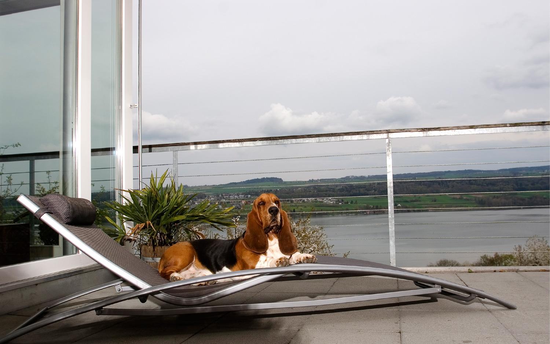 Sir Archibald auf der Terrasse am Hallwillersee