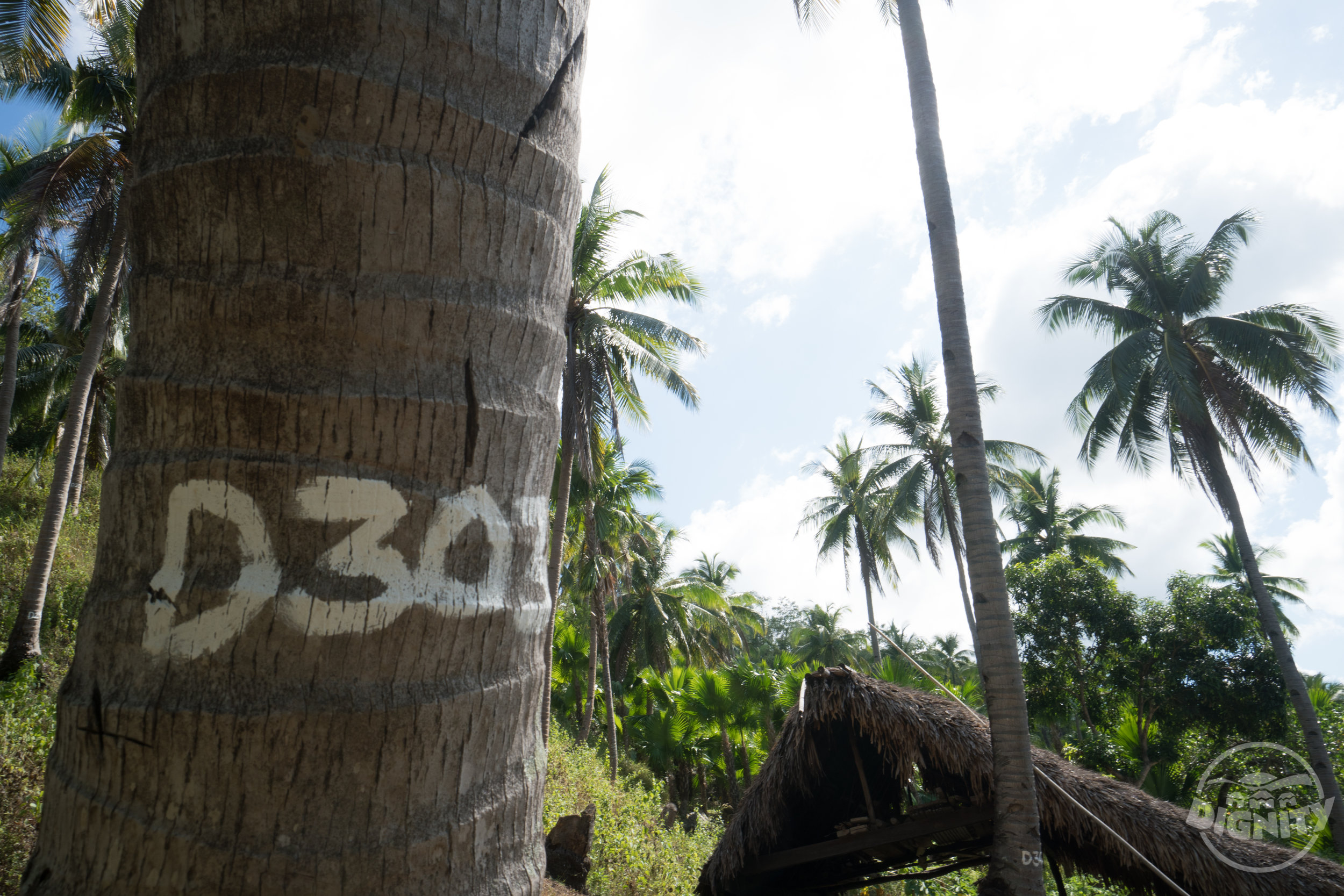 Certify every tree - Third, we number EACH tree. That's right. We have individually numbered 54,514 coconut trees. They are all approved as Organic. We can even trace your jar of coconut oil back to one of the exact trees it came from.