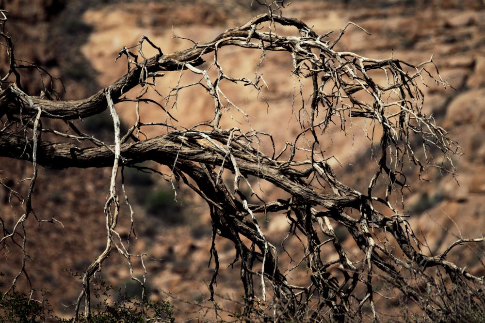 MSissons-Namibia2018 (8 of 60).jpg