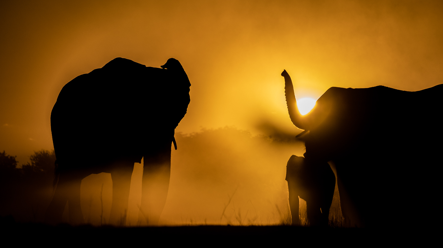 hwange-elephants-1.jpg