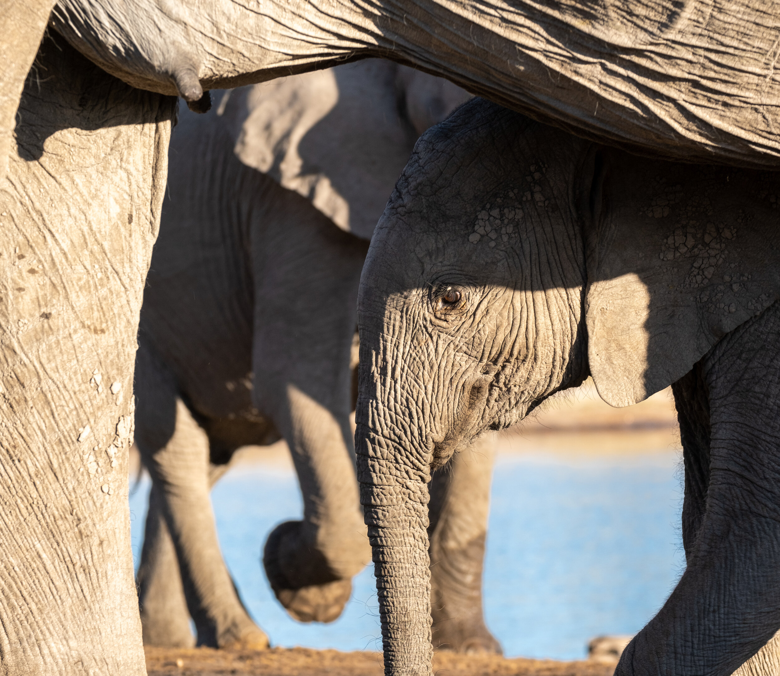 Heartbeat of Hwange - In the wild heart of Zimbabwe's largest national park, travellers find purpose on a safari that saves lives.