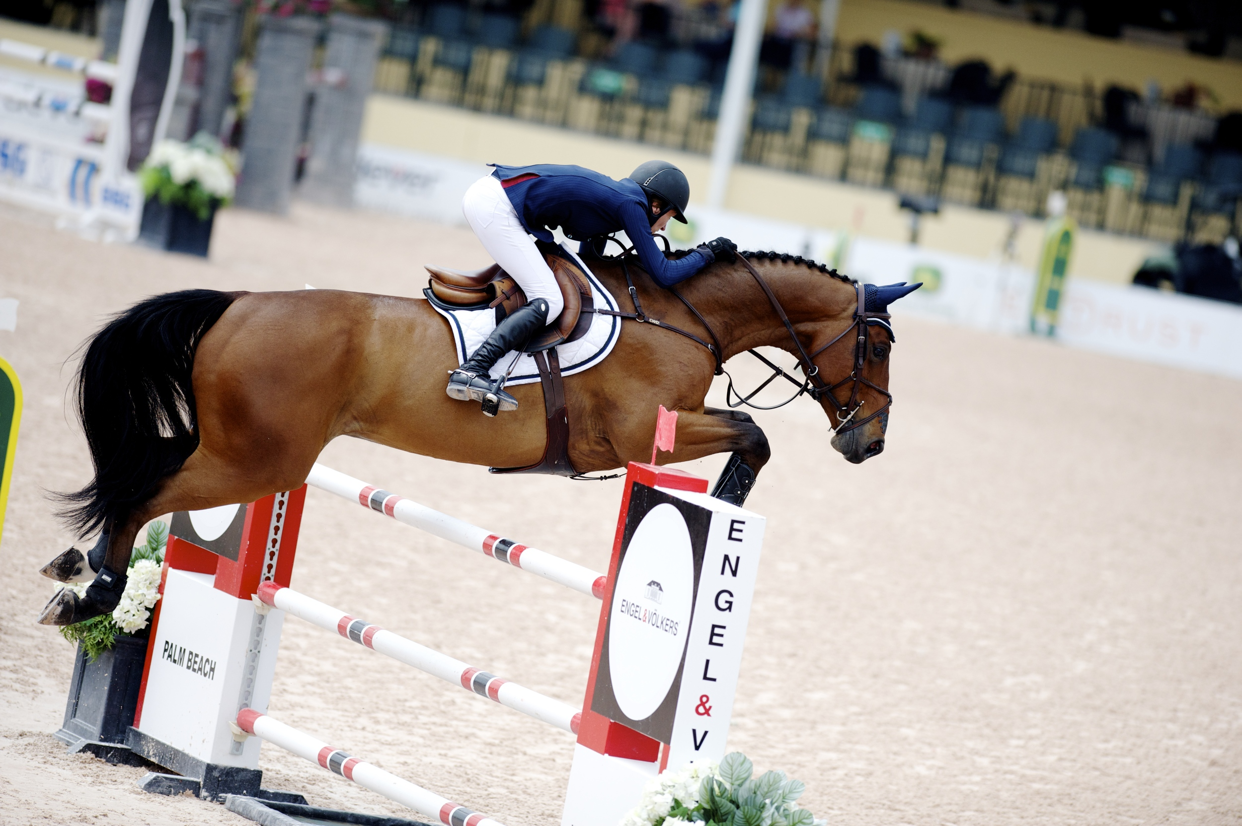 Molly Ashe and Astakkato finished 6th in today's $20,000 Adequan 7 YO Classic II