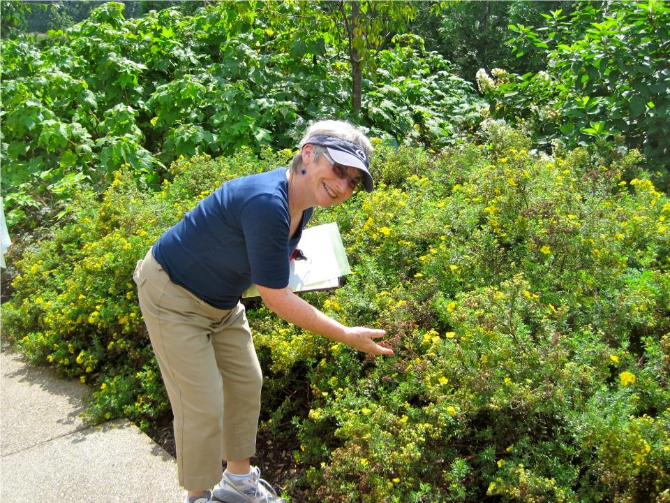 Susan describing at the Arboretum.