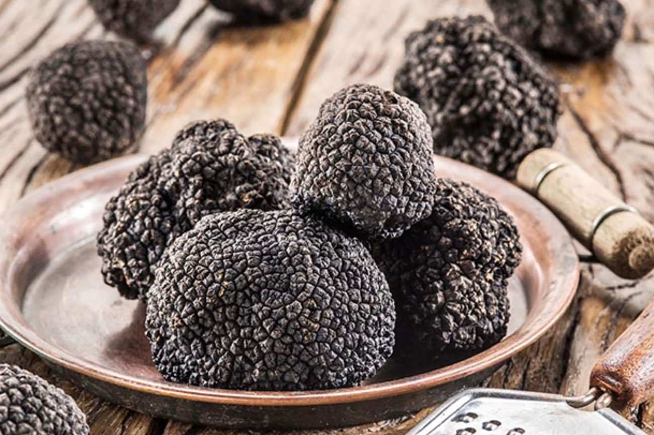 Waikato Truffles – the fruit of the Gods. Image courtesy of http://thisnzlife.co.nz/sheryn-clothier-experiments-growing-truffles-waikato-home/