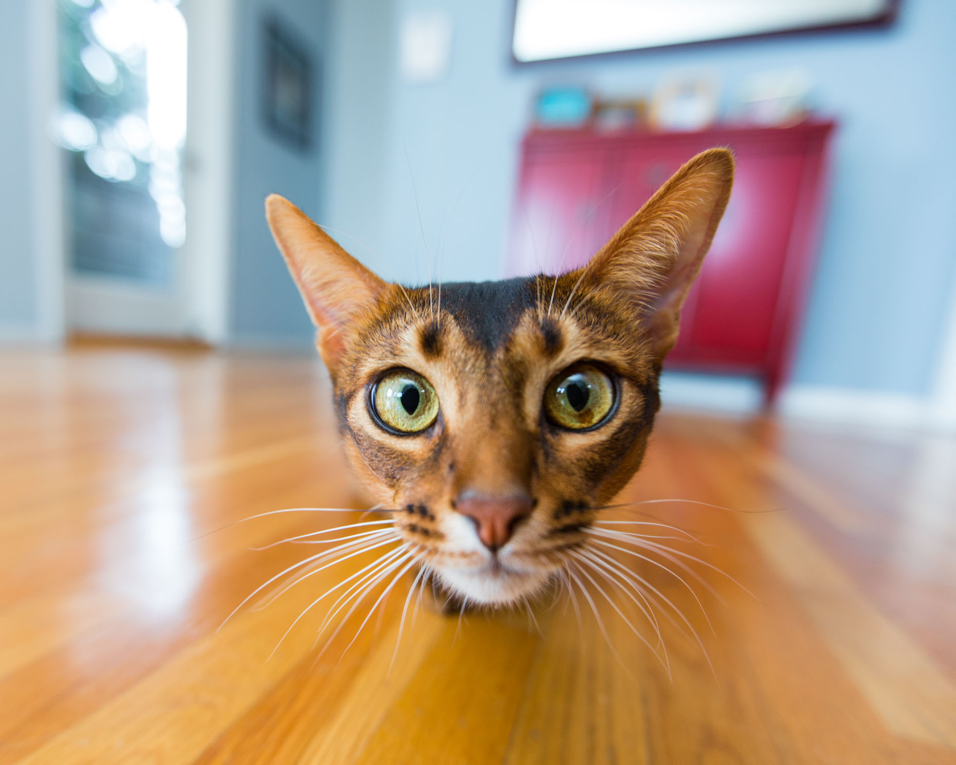 Curious by nature, creatives and strategists could learn from the humble house cat.