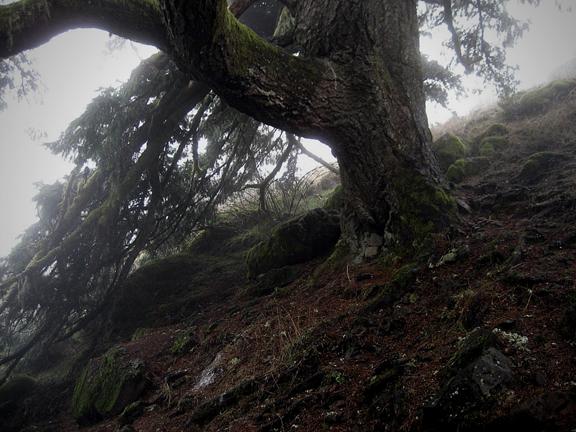 EllefolkGazette_HerbivoreApothecary_WeedWalk_Introduction_Landscape
