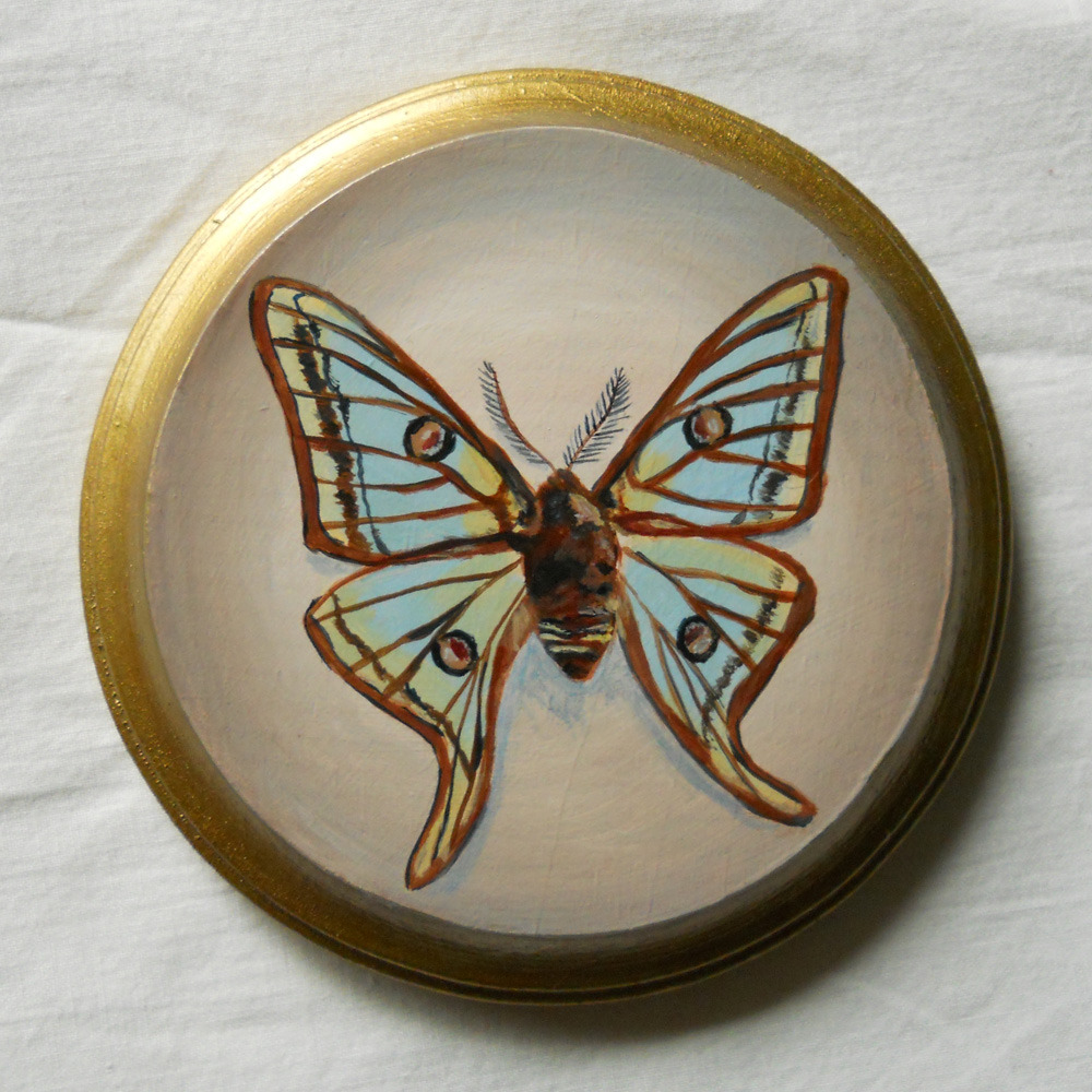 spanish moon moth , acrylic on wood 5""