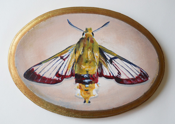 "bee hawk moth , acrylic on wood 7"" x 5"""
