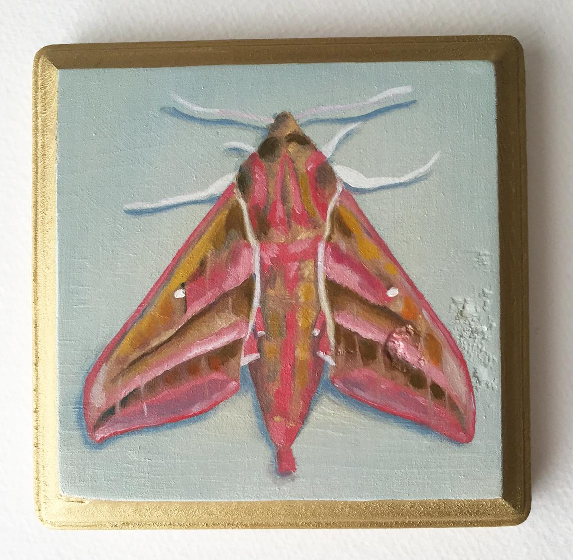 "elephant hawk moth   oil on wood 5"""