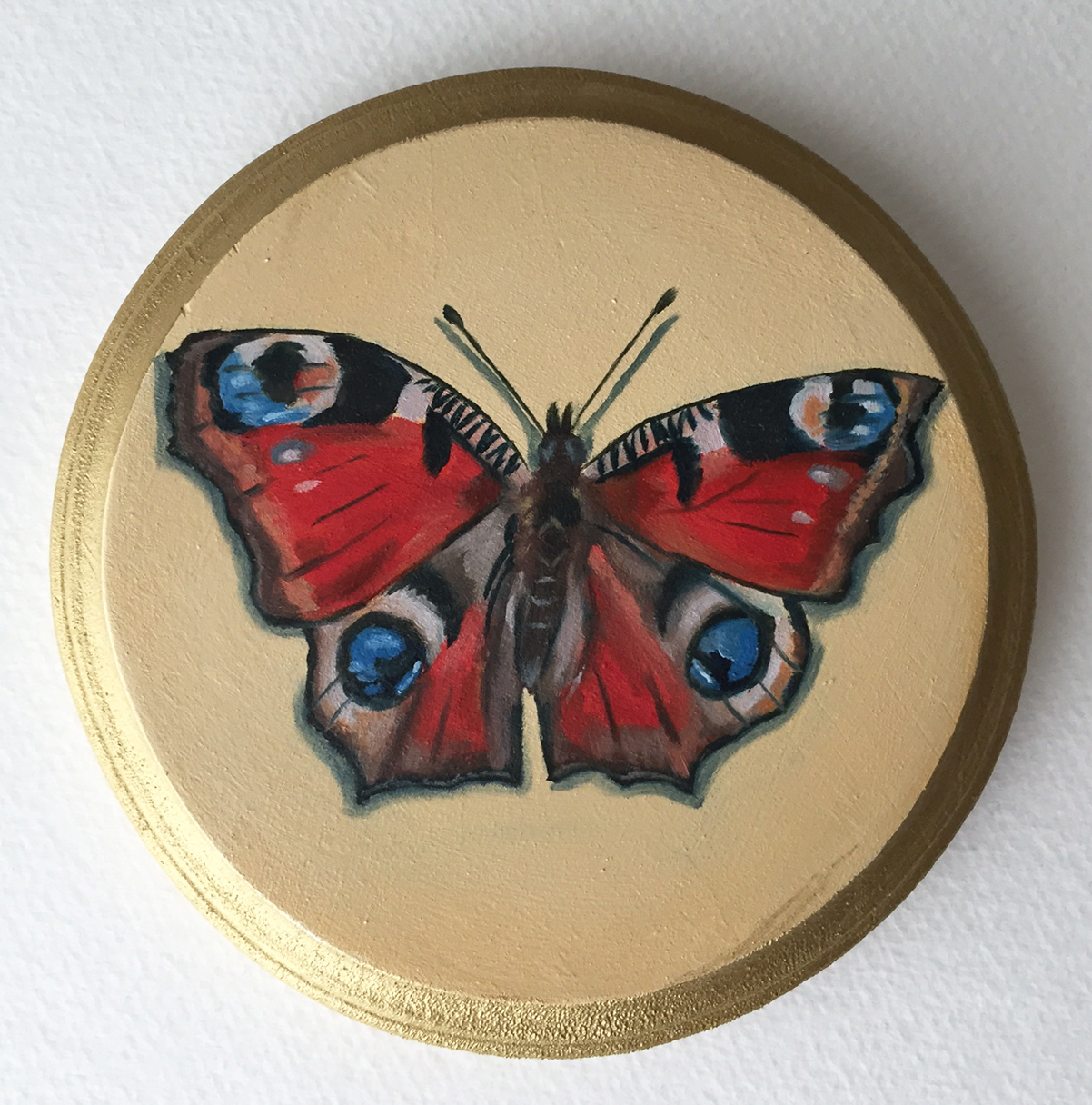 "peacock moth   oil on wood 5"""