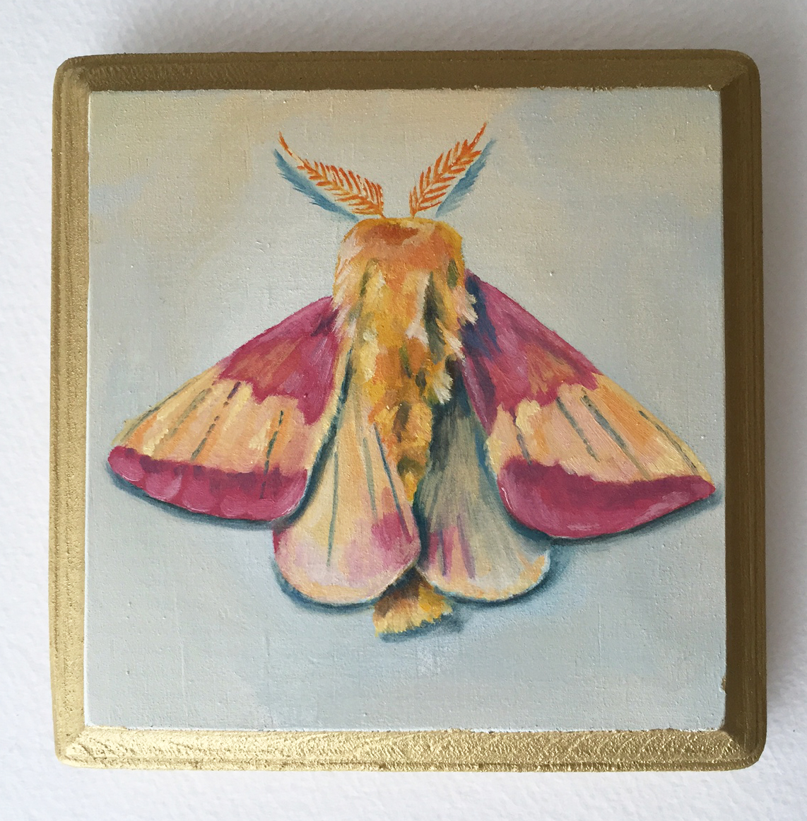 """rosy maple moth   oil on wood 5"""""""