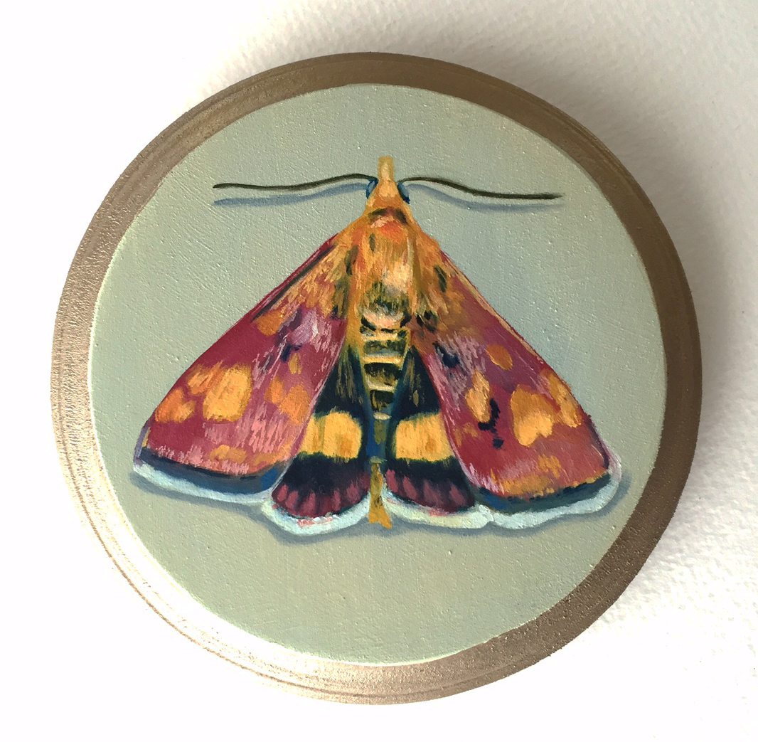 """southern mint moth   oil on wood 5"""""""