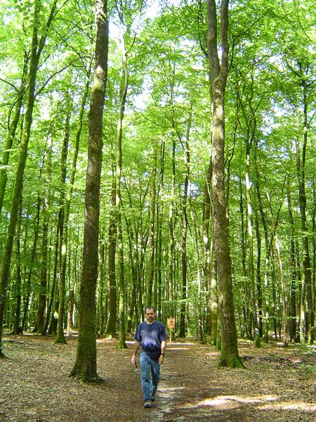 La forêt de Bellême dans le Parc Naturel du Perche.  ( http://www.parc-naturel-perche.fr/  )      Photo: Louise Beaupré
