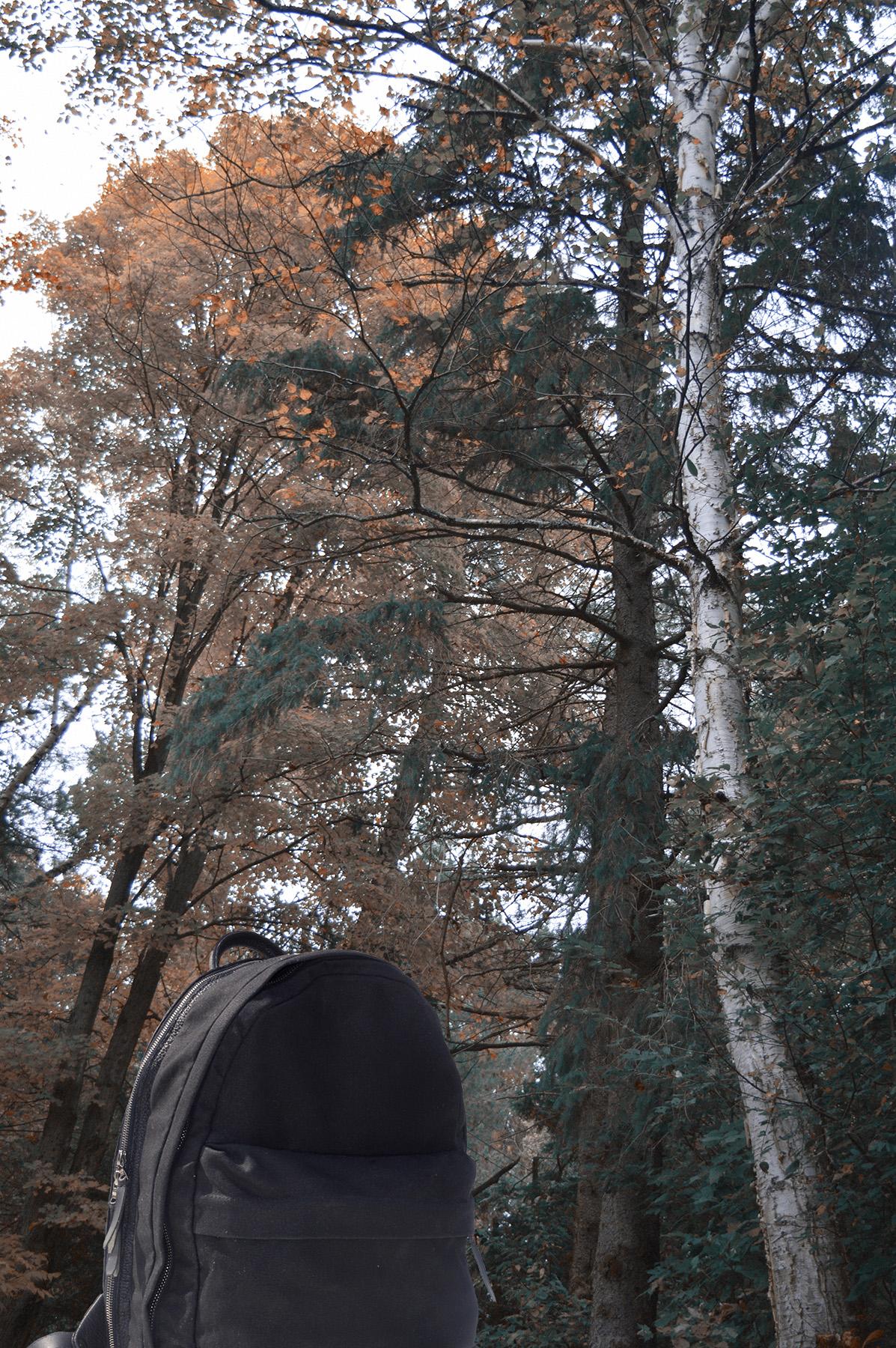 web_ander_trees road2.jpg