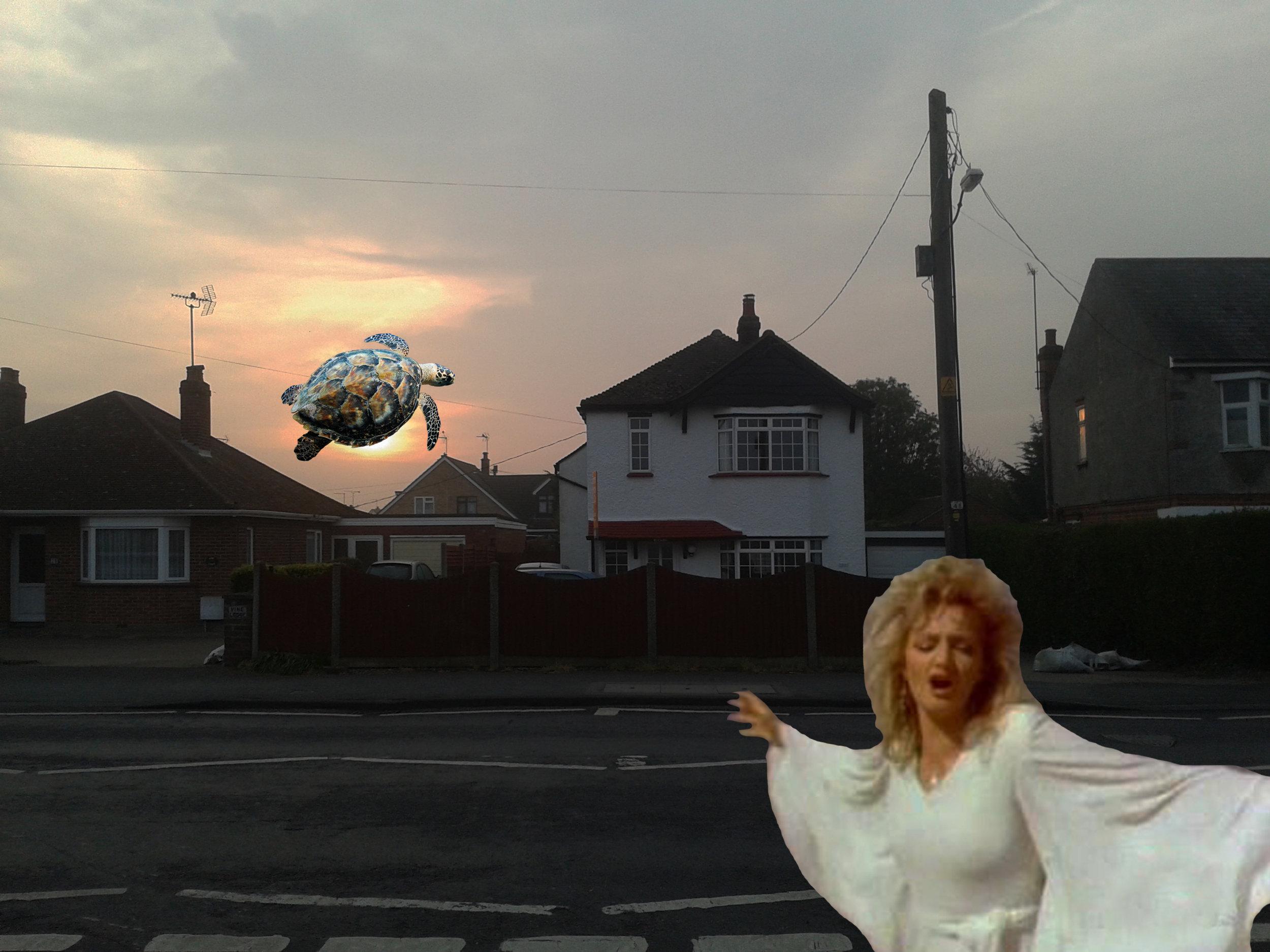 Turtle eclipse