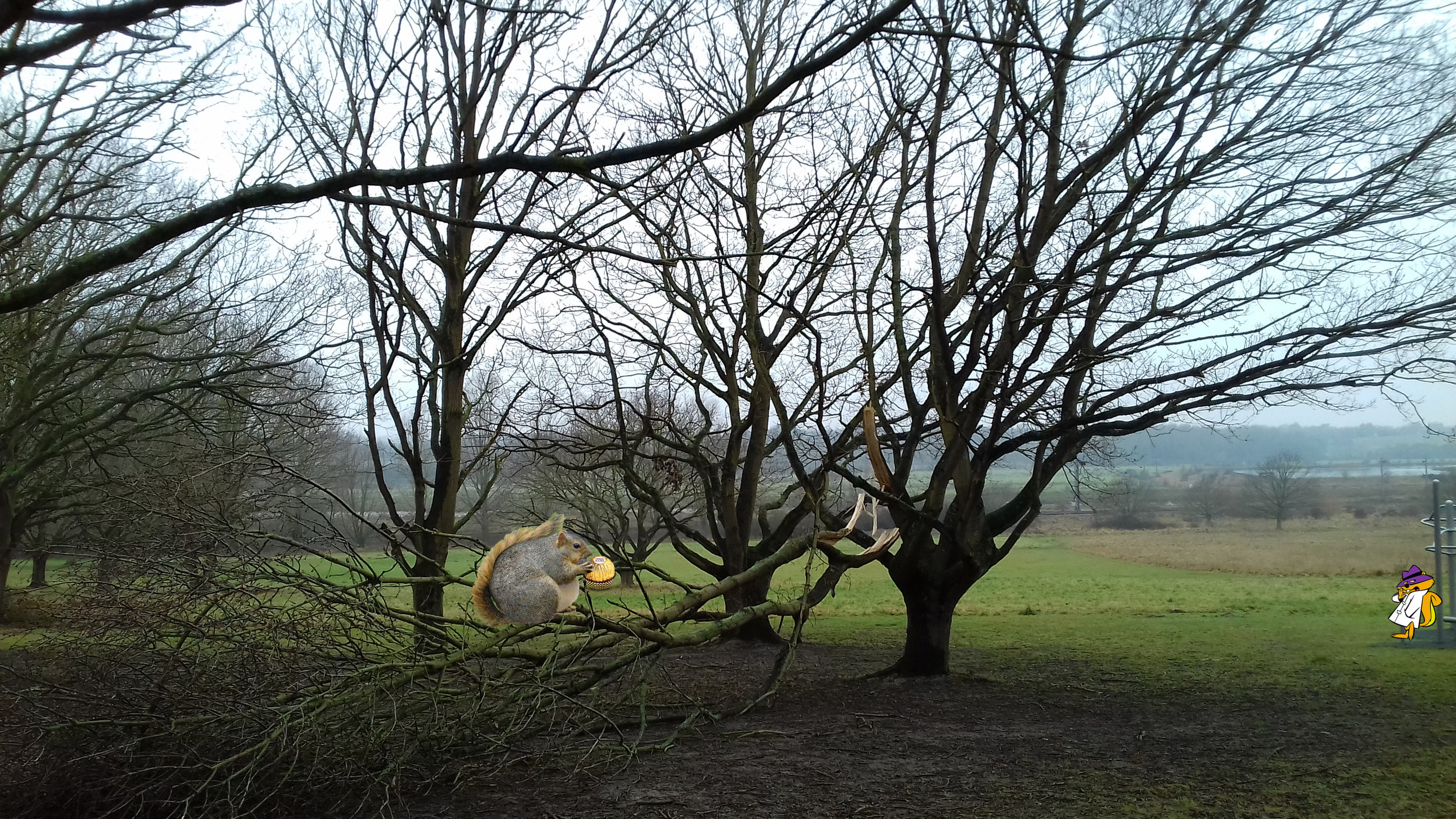 An overweight furry fat face filler destroys yet another tree as it gorges on Ferrero Rocher