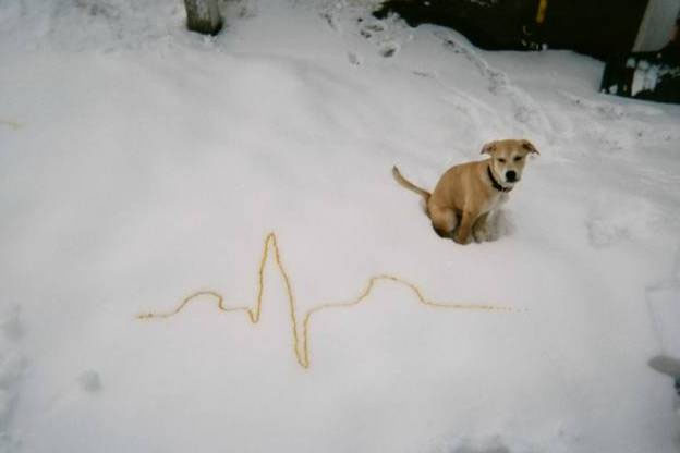 A brave dog turns its nose up at the acrid bitter taste of the notorious yellow snow