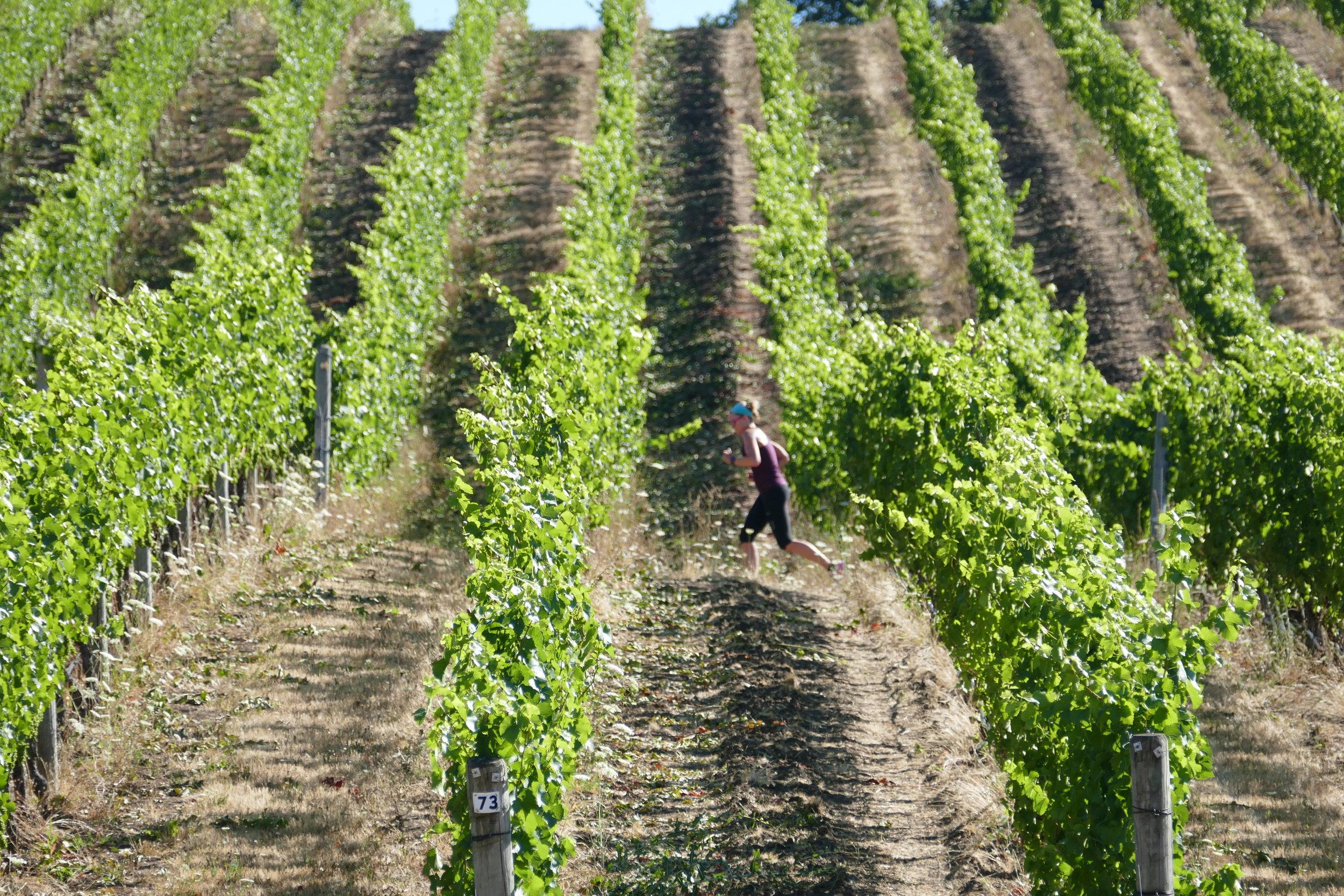 vines.jpeg