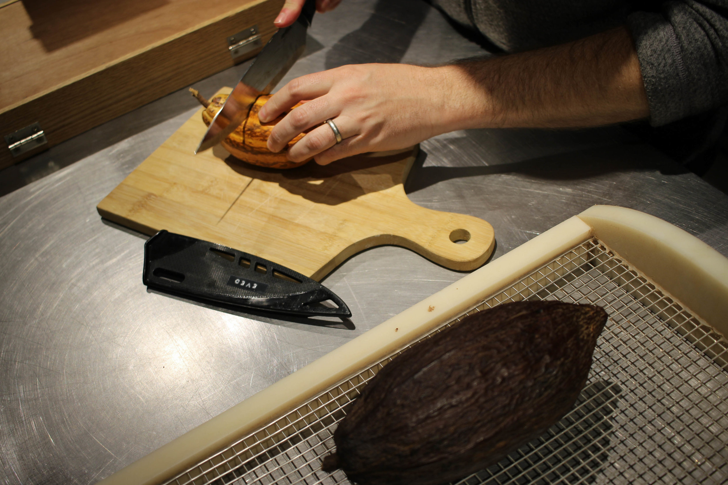Cutting into a fresh cocoa pod. The dark one on the grate is a dried cocoa pod.