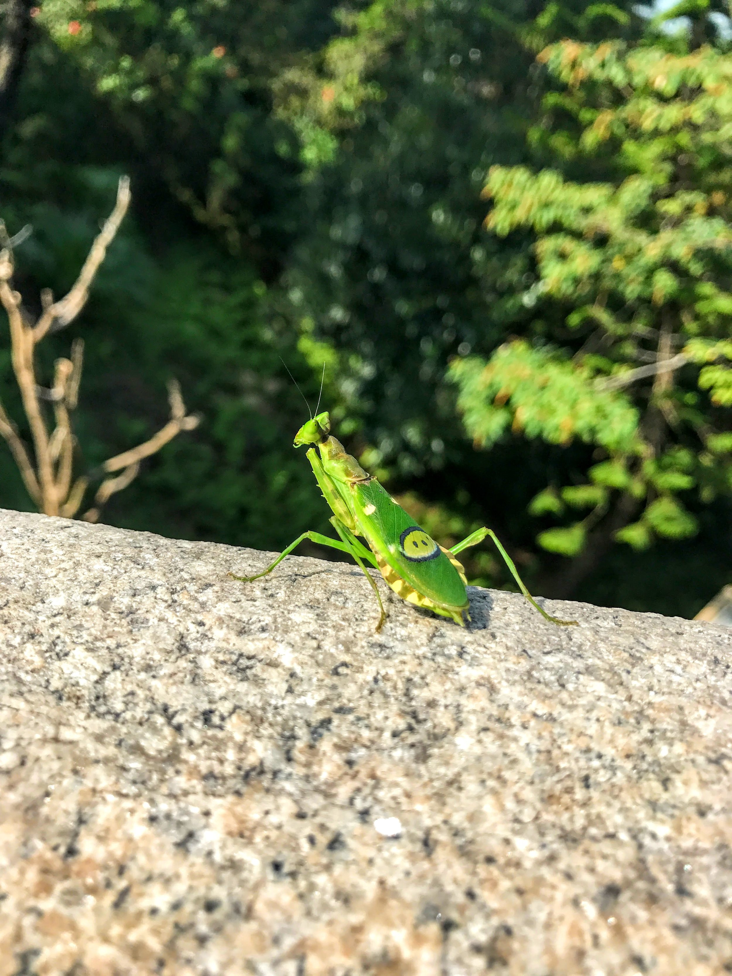 Emoji praying mantis // Hong Kong