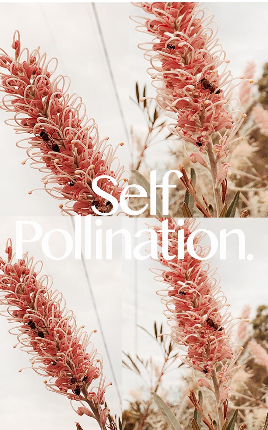AugustJournal-SelfPollination.jpg