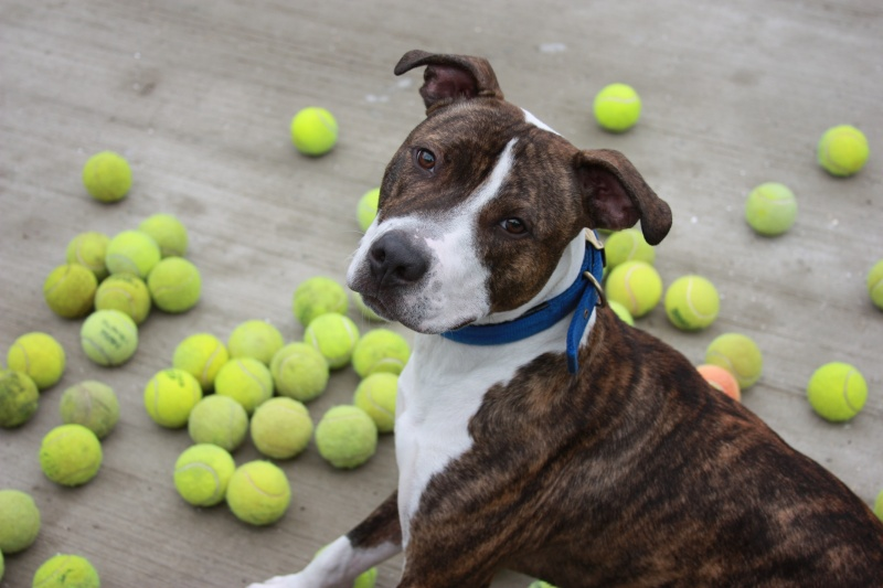 dog with tennis balls