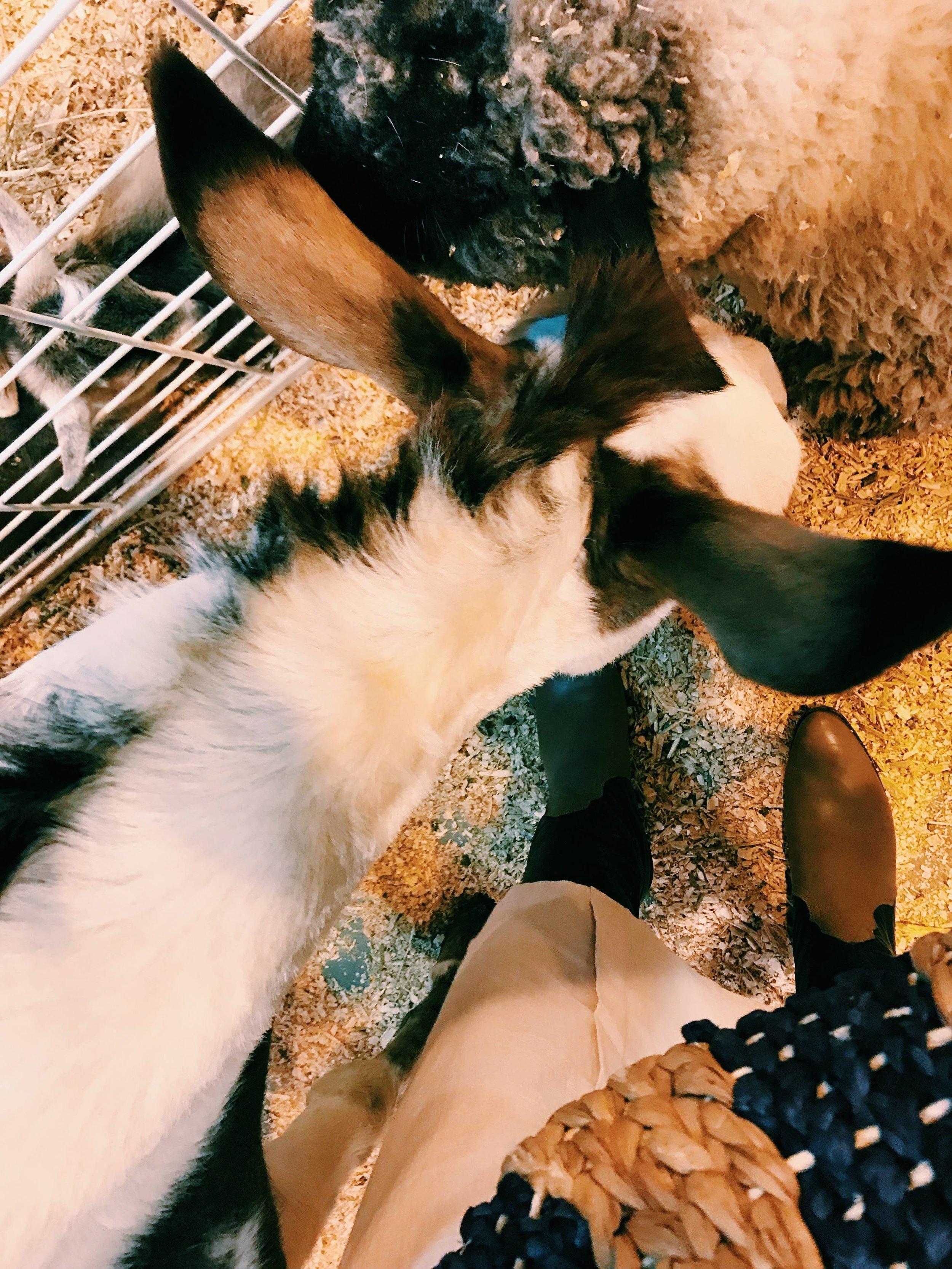 Three Heel Clicks - Houston Hotspots - The Rodeo (23).jpg