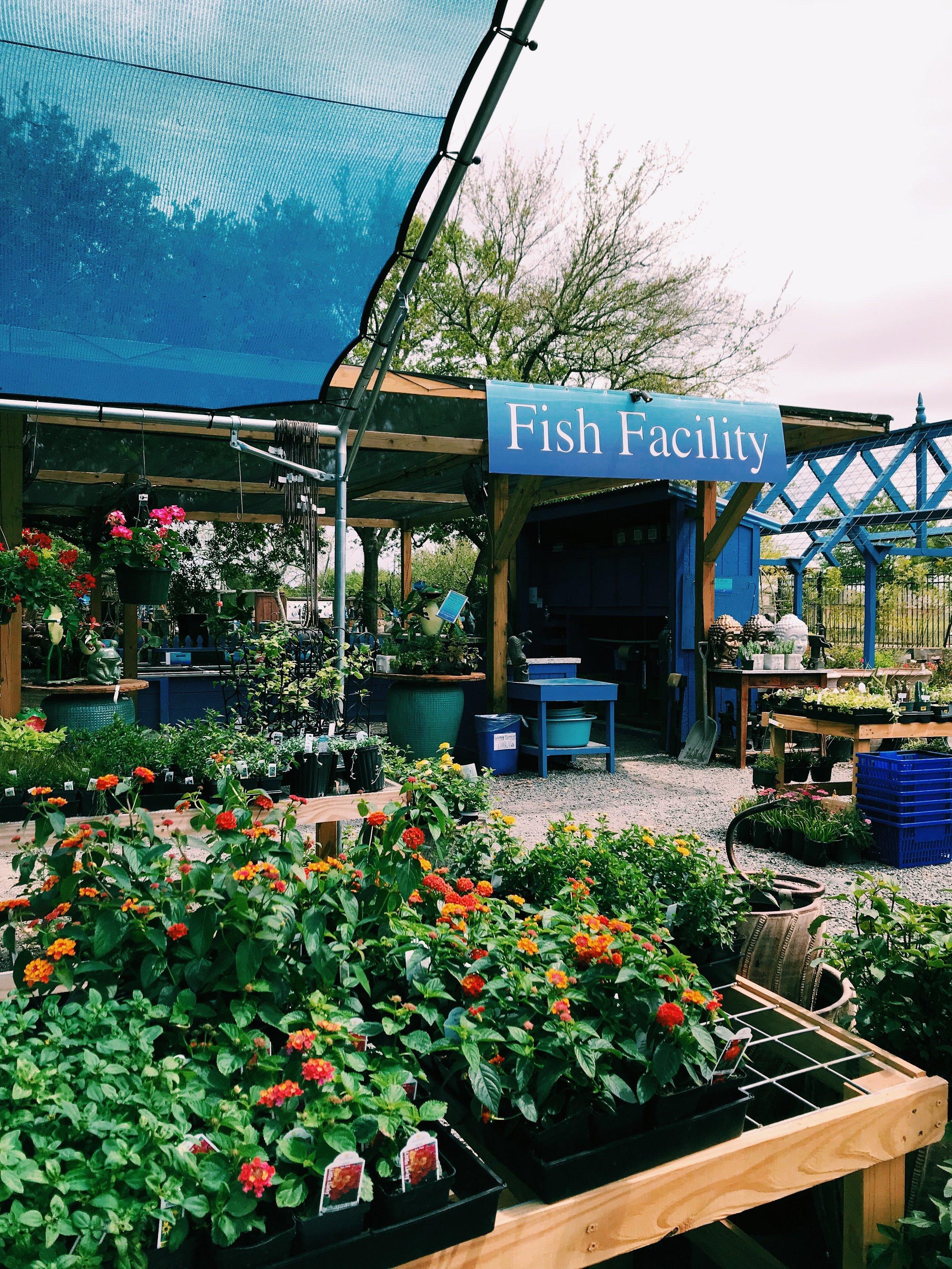 Three Heel Clicks - Houston Hotspots - Nelson Water Gardens (30).jpg