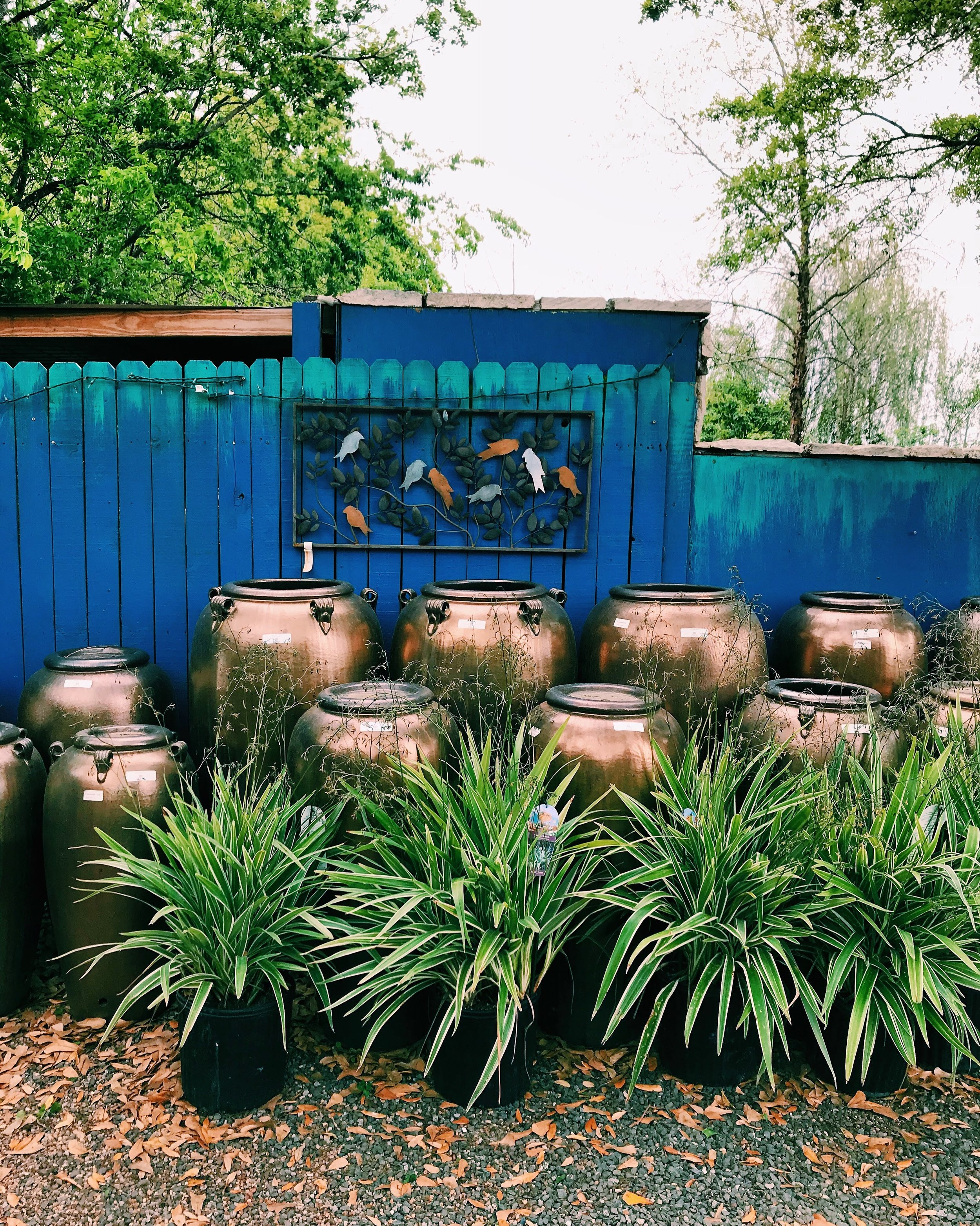 Three Heel Clicks - Houston Hotspots - Nelson Water Gardens (4).jpg
