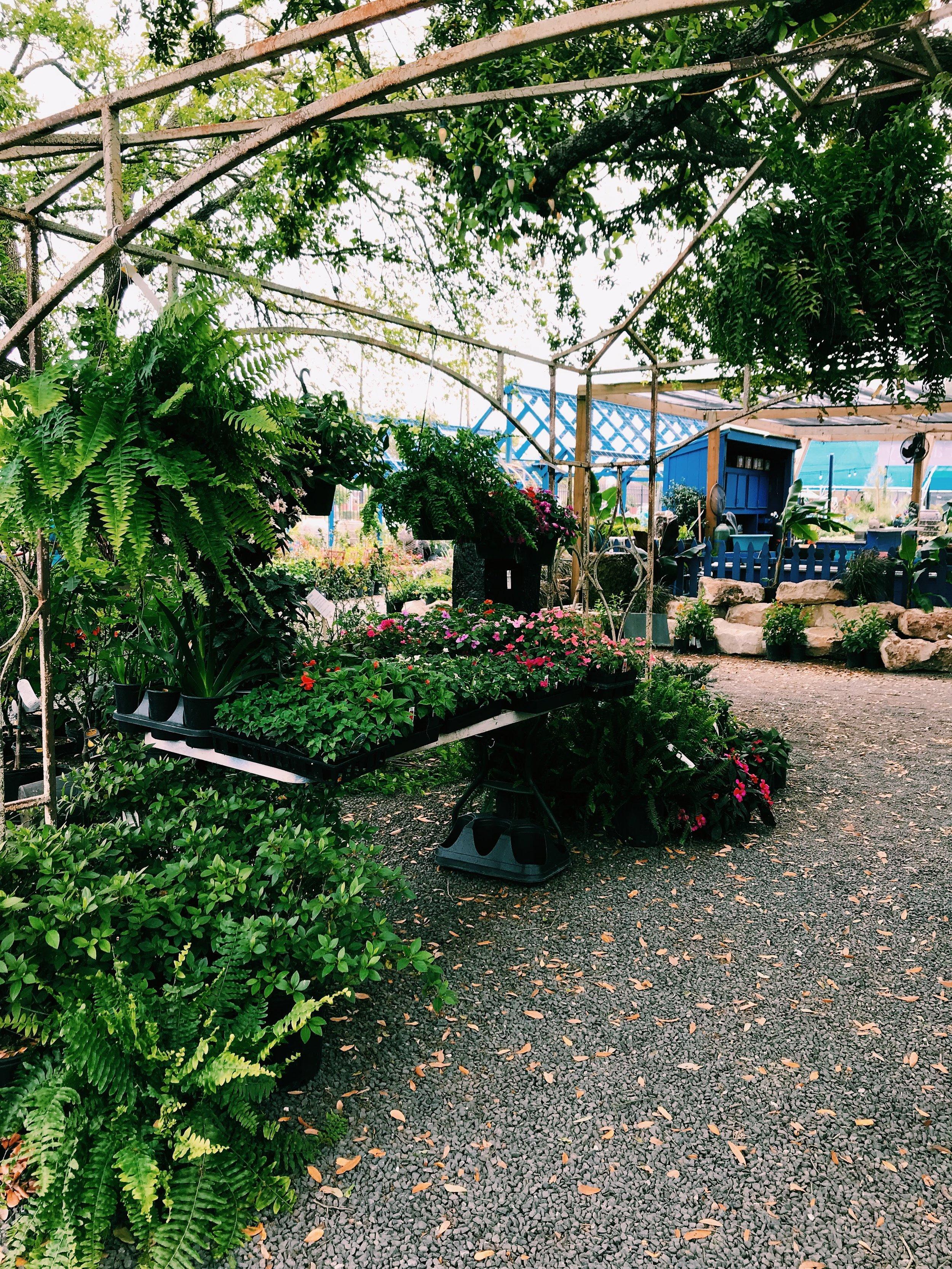 Three Heel Clicks - Houston Hotspots - Nelson Water Gardens (31).jpg