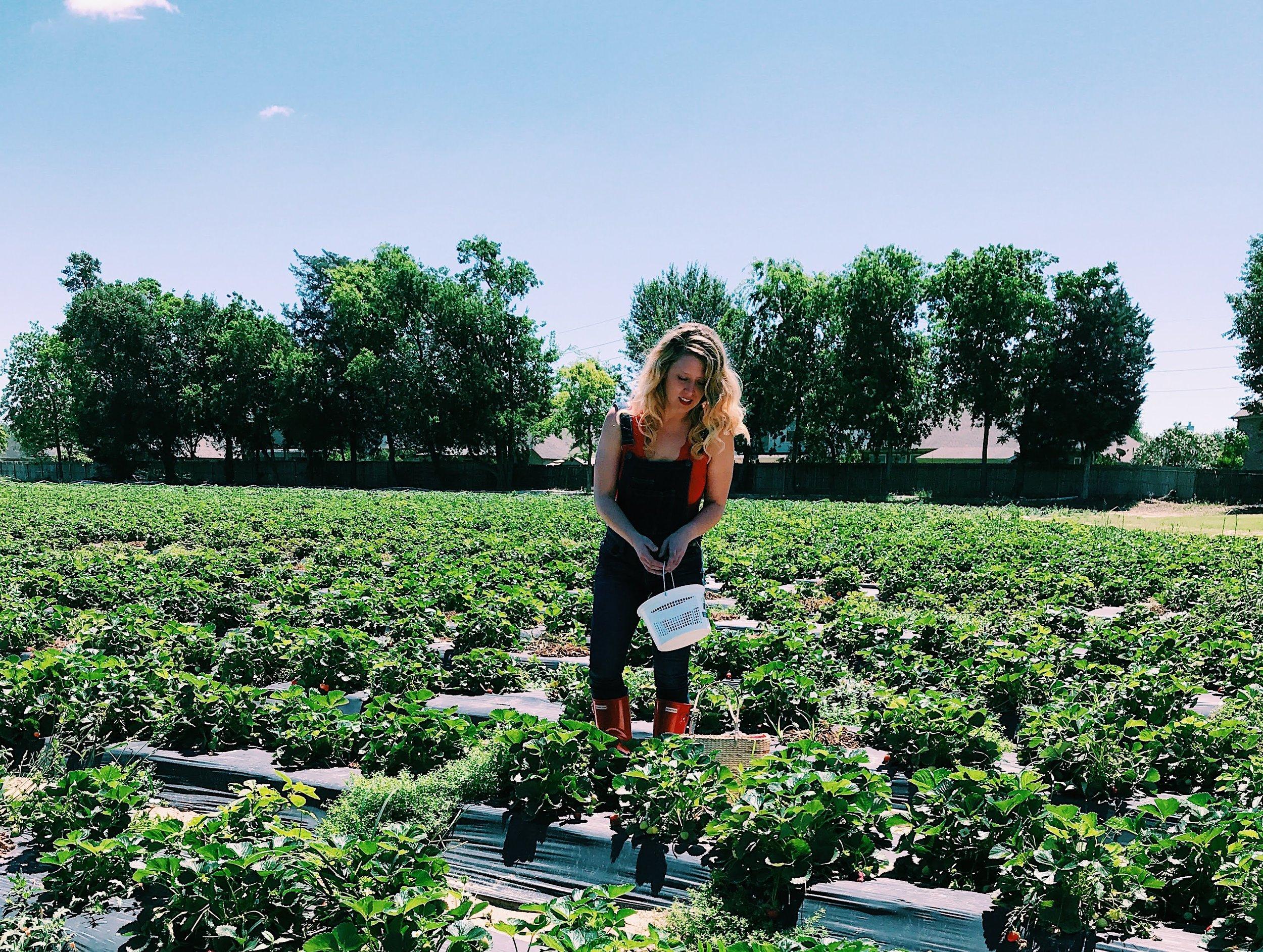 Three Heel Clicks - Strawberry Picking at Atkinson's Farms (21).jpg
