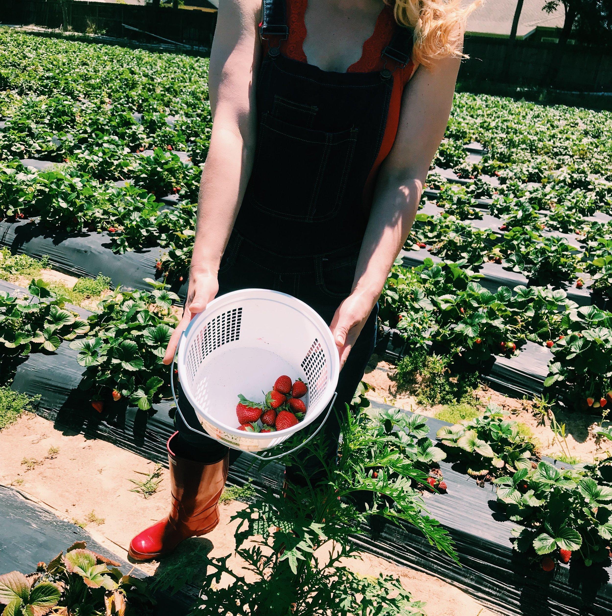 Three Heel Clicks - Strawberry Picking at Atkinson's Farms (5).jpg