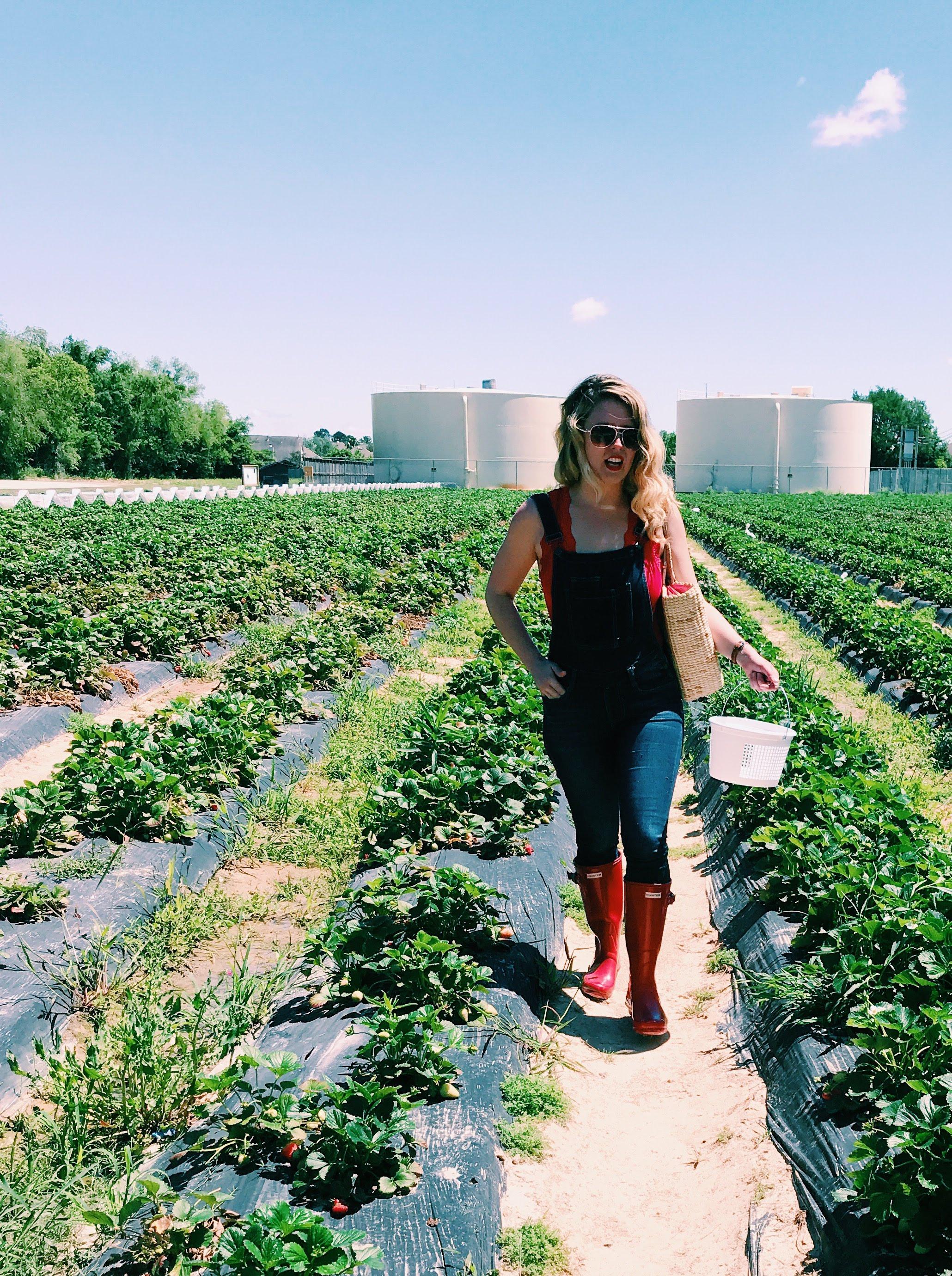 Three Heel Clicks - Strawberry Picking at Atkinson's Farms (18).jpg