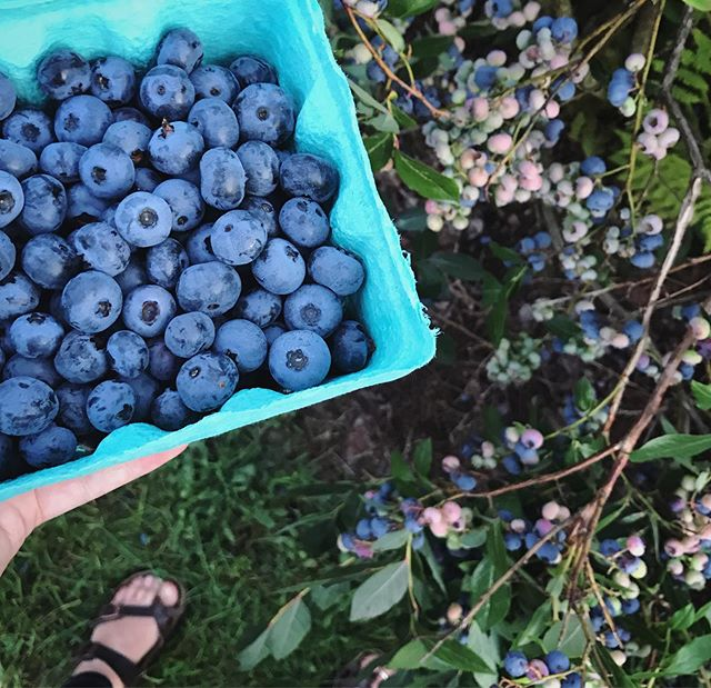 such a lovely palette. one of our favorite places in #vermont. a perfect evening at @owlsheadblueberryfarm ... yes we may be spamming you with summer and food posts and we don't even feel bad about it. 💙 #blueberries and #bluegrass #meditation #twoformenoneforyou #sevenquarts