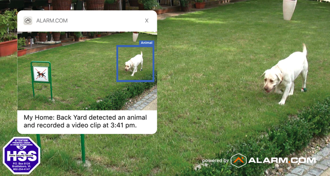 Animal Detection.png