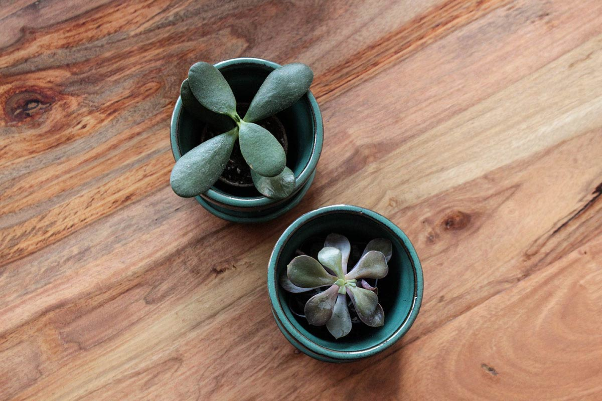 Succulents make a great gift idea for your favorite coworker. They are easy to take care of and can brighten up any desk.