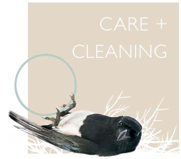 maddalena_bearzi_care_cleaning.jpg