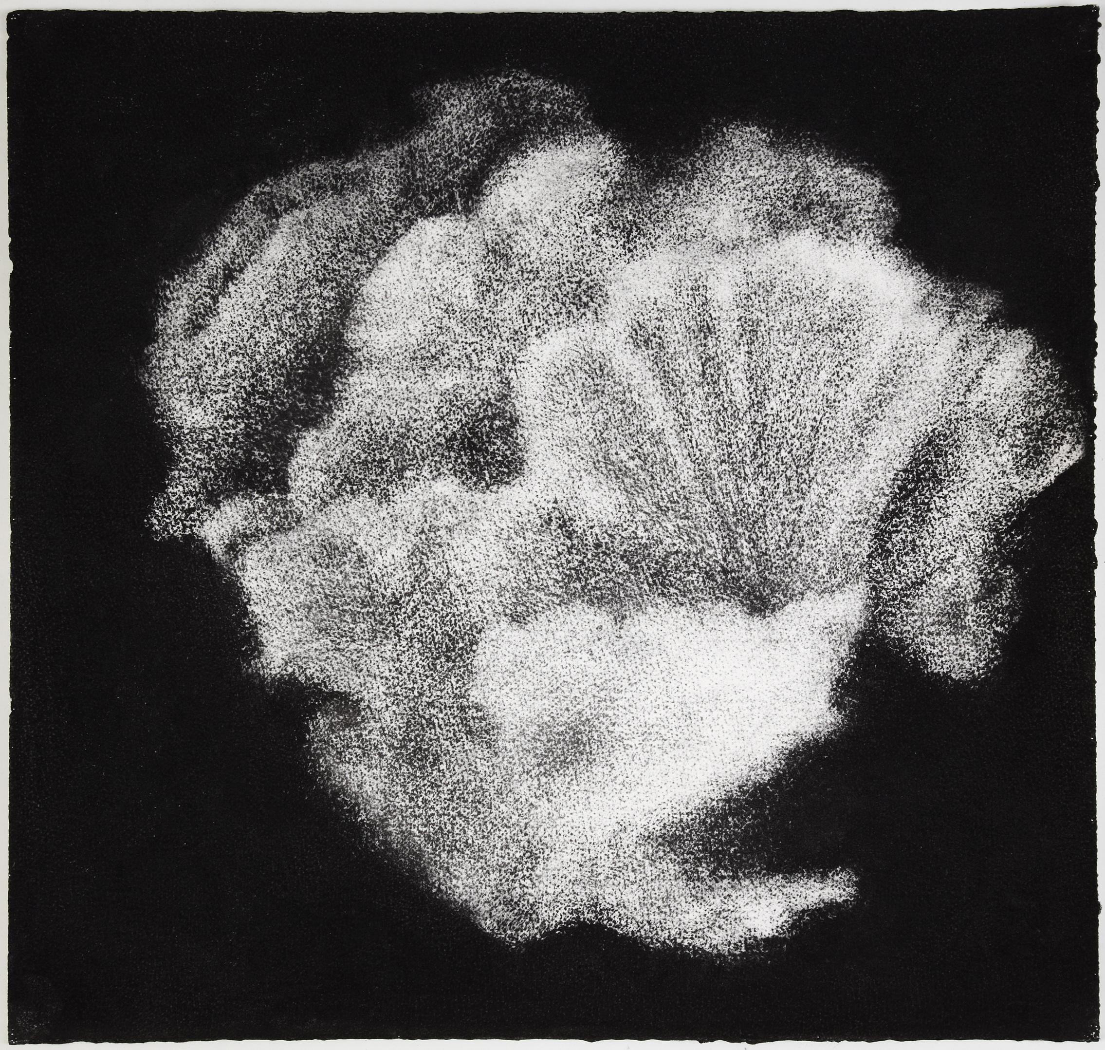 Sea sponge, 2012,charcoal on paper, 57 x 60 cm