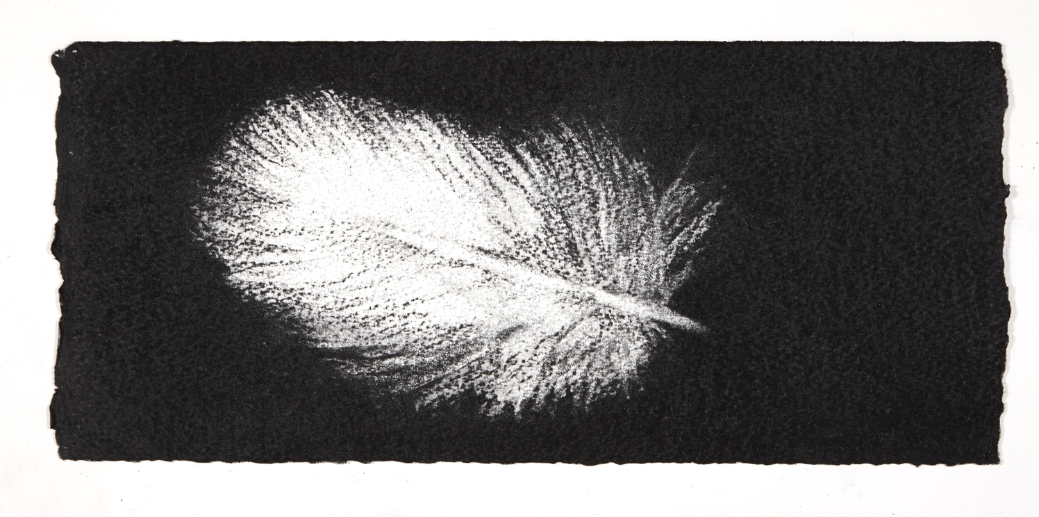 Feather, 2014, charcoal on paper, 13.5x31cm