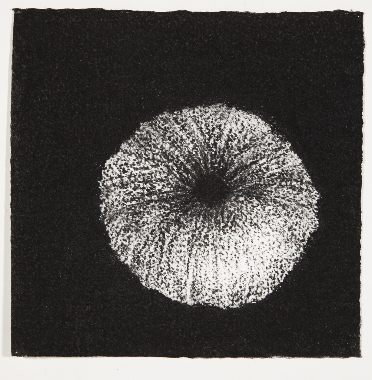 Urchin, 2014, charcoal on paper, 18x18cm