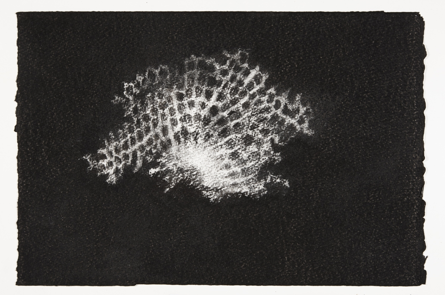 Wasp's Nest, 2013-2014, charcoal on paper, 22x33cm